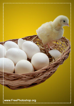 Cute Chick and Eggs Basket