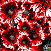 Flowers Patterns