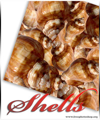 Shells Patterns