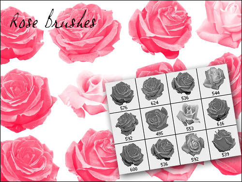 Rose Brushes Free Downloads And Add Ons For Photoshop
