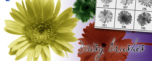 daisy brushes